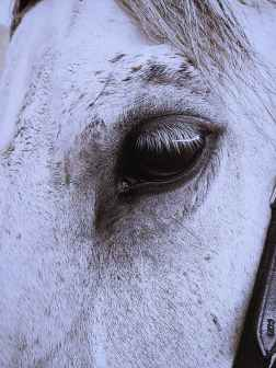 close up photography of white horse