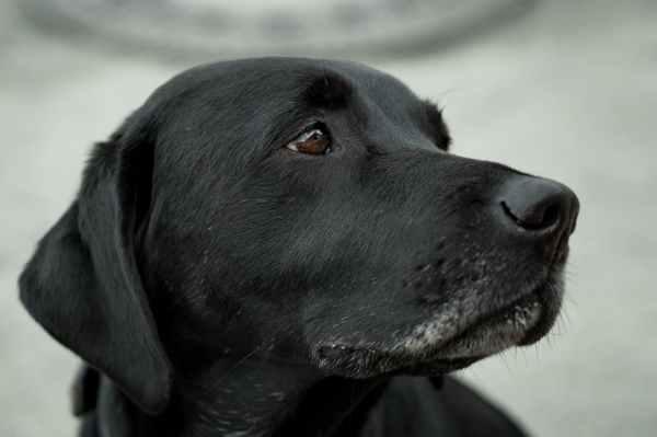 animal canine close up dog